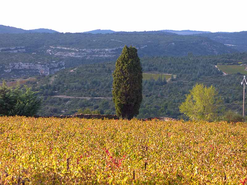 october colours and light in october near la caunette in languedoc